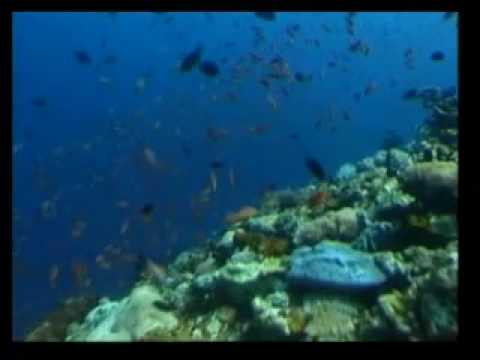 Awesome Vis - Scuba diving Asia