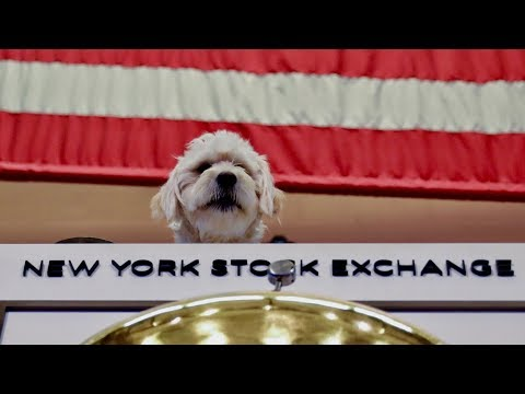 chewy-ceo-talks-ipo,-'pet-parents,'-and-building-a-one-stop-pet-shop