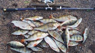 Восемь дней в тайге. Одиночный поход по северной реке | часть 3 | Бешеный клёв. Ведро рыбы за 2 часа
