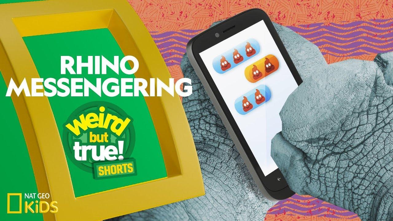 Rhino Messengering | Weird But True! Shorts