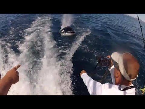 Killer Whales Playing With Fishermen || ViralHog