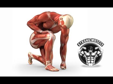 Tiempo de recuperaci�n del musculo
