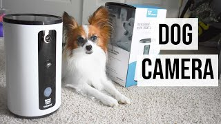 What My Dog Does Home Alone // WOpet Smart Pet Camera Review // Percy the Papillon Dog