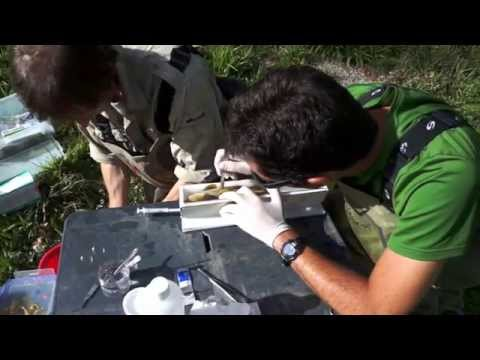 Radio tracking Mediterranean brown trout