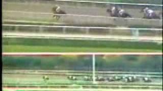 Gran Premio Latinoamericano de Jockey Clubs 1986 La Rinconada, Venezuela - Lutz (Peru)