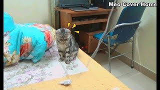 Cat Play Around Home With Cat Toy | Cat And Kittens 2019