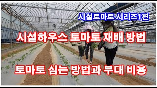 토마토 시설하우스 재배 방법과 부대 비용 설명/시설하우…
