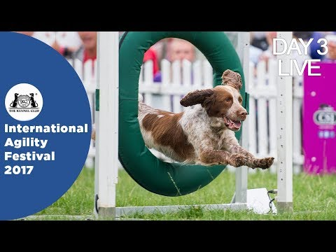 DAY 3 LIVE | International Agility Festival 2017