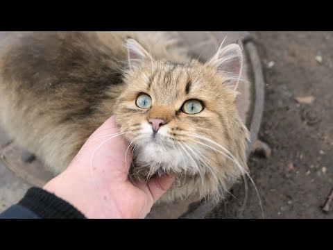 Fluffy cat with cute cat they are friends
