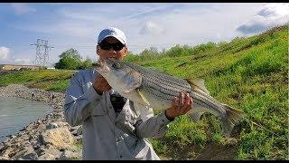Câu Cá Giải Trí ở Mỹ--Những Cao Thủ Câu Cá Bass