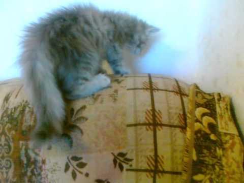 обучение работников могут ли видеть коты духов растение