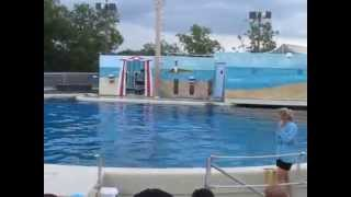 sea lion show fish factor six flags great adventure animal trainers 2013