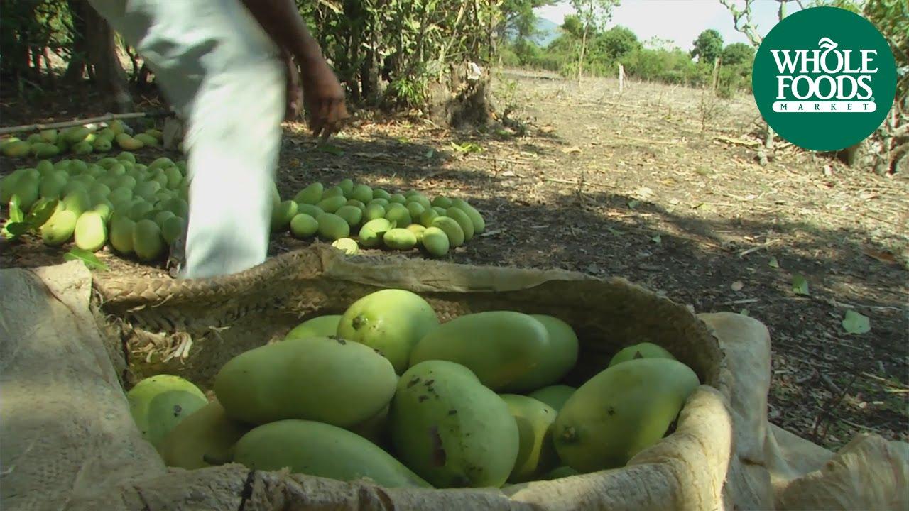 Whole trade haitian mangoes produce whole foods market youtube ccuart Choice Image