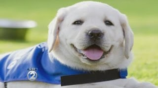 New bill targets fake service dogs