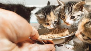 Kittens React to Real Food *TOO CUTE!*