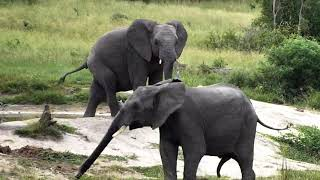 Djuma Private Game Reserve Live Stream - Elephants come for a drink and some spa time thumbnail
