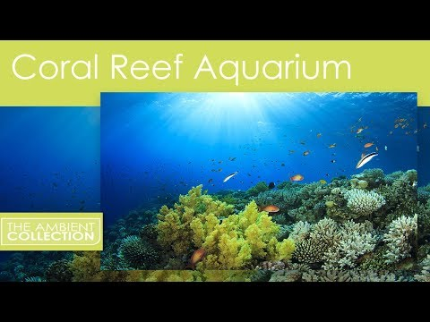 Aquarium DVD - Coral Reef Aquarium 110 Minutes of  Fishtanks with  and Nature Sounds