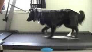 Dog Treadmill Training - Johann Treadmill Training Update