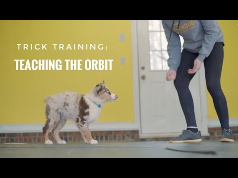 Trick Training: Teaching the Orbit