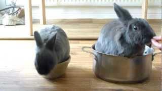 Rabbit Clicker Training - Rabbit Pie And Rabbit Stew