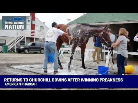 American Pharoah Returns To Churchill Downs After Winning Preakness - Triple Crown Winner