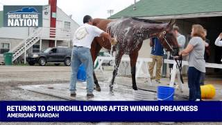 American Pharoah Returns to Churchill Downs After Winning Preakness - Triple Crown Winner