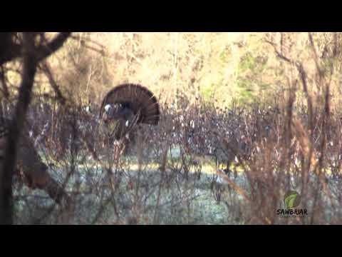 Alabama Turkey Hunt-Opening day 2018