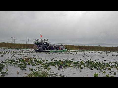 Fort Lauderdale - Everglades: Airboat Ride (Royal Princess Excursion)