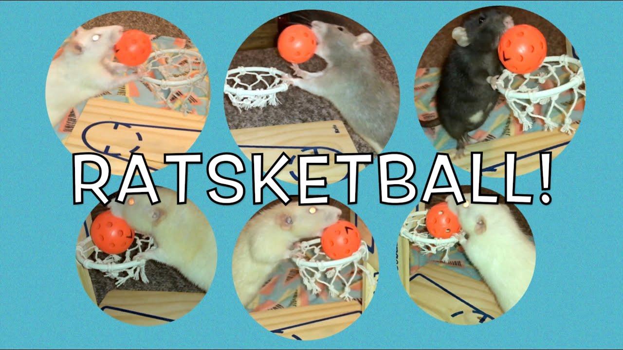 Rat Basketball CHAMPIONSHIP!
