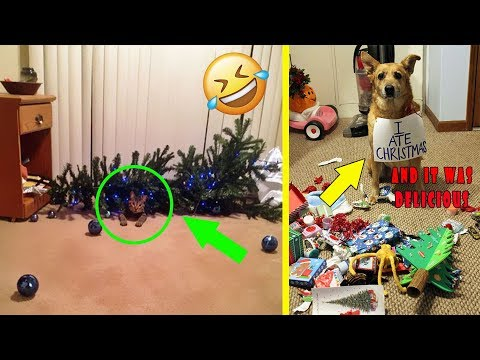 Dogs And Cats That Destroyed Christmas | Funny Photos