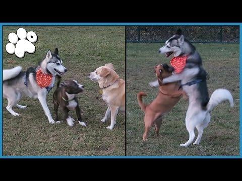 NORA AT THE DOG PARK!