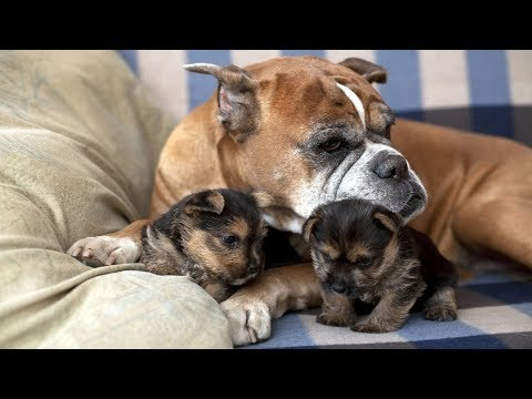 Dogs Protecting Their Puppies Compilation