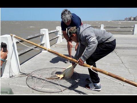 Pesca en el muelle de Mar de Ajó. Argentina