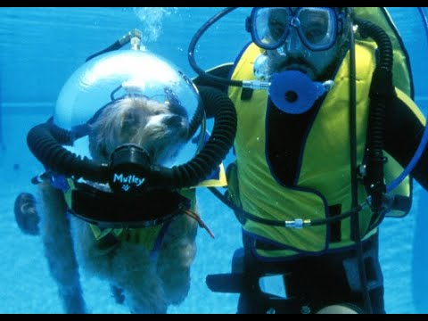 Dog goes scuba diving in 1 000 suit youtube - Dive in scuba ...