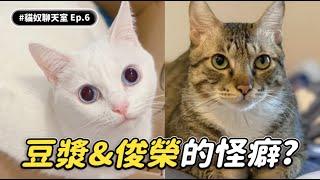 【豆漿&俊榮的怪癖】 #貓奴聊天室 EP.6 志銘與狸貓 ft.豆漿