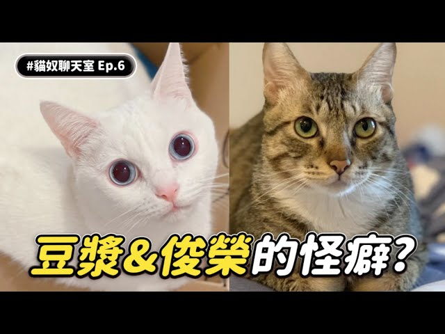 【豆漿&俊榮的怪癖?】 #貓奴聊天室 EP.6 志銘與狸貓 ft.豆漿