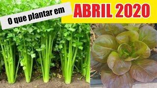 Plantas Para Ser Semeadas no Mês de Abril