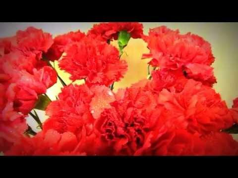 """Хризантема одиночная """"Зембла"""", http://neskuchnyj-sad.tiu.ru/из YouTube · С высокой четкостью · Длительность: 1 мин7 с  · Просмотры: более 1.000 · отправлено: 15.05.2012 · кем отправлено: нескучный сад новоуральск"""