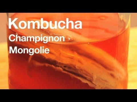 Kombucha : t'as déjà goûté ?