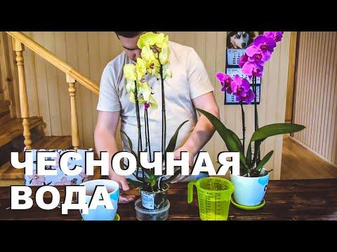Как сделать удобрение для Орхидей. Чесночная настойка/вода для цветения орхидеи.