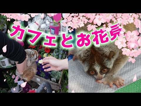 カフェとお花見なスローロリス(りんころちゃん)#237