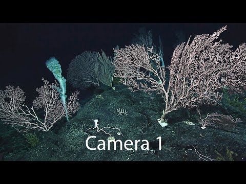 Camera 1: Exploring Deep-sea Habitats off Puerto Rico & the U.S. Virgin Islands