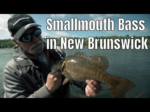 Smallmouth Bass In New Brunswick | Fish'n Canada