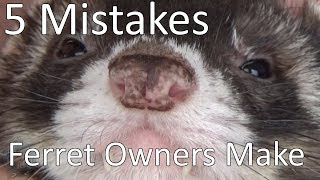 5 Mistakes New Ferret Owners Make