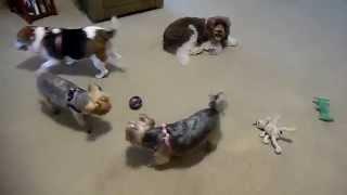 A Sneak Peak: Doggie Daycare Indoor Playtime