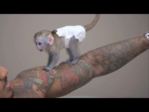 Angry Baby monkey attacks owner during playtime! 4k HD