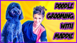 Brushing & Combing How To Video Tutorial with Maddie the GoldenDoodle