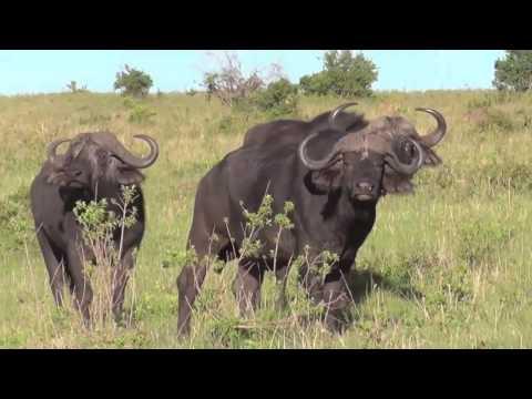 Masai Mara Safari Nov 2014