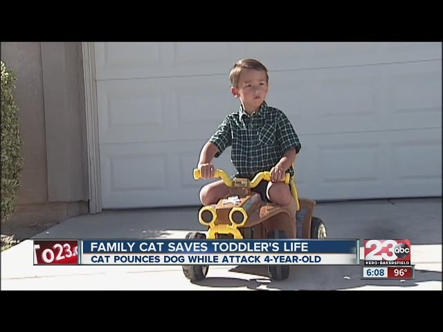 New Details: Incredible feline saves owners son