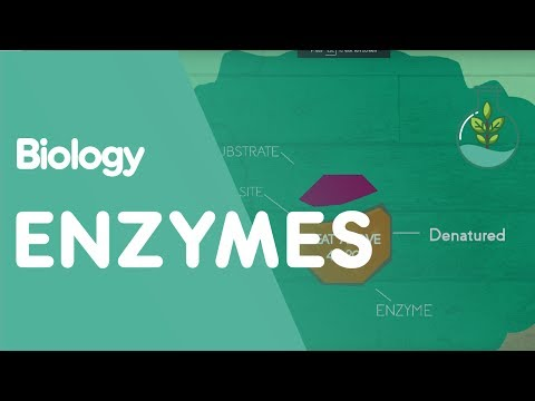 How Enzymes Denature | Biology for All | FuseSchool